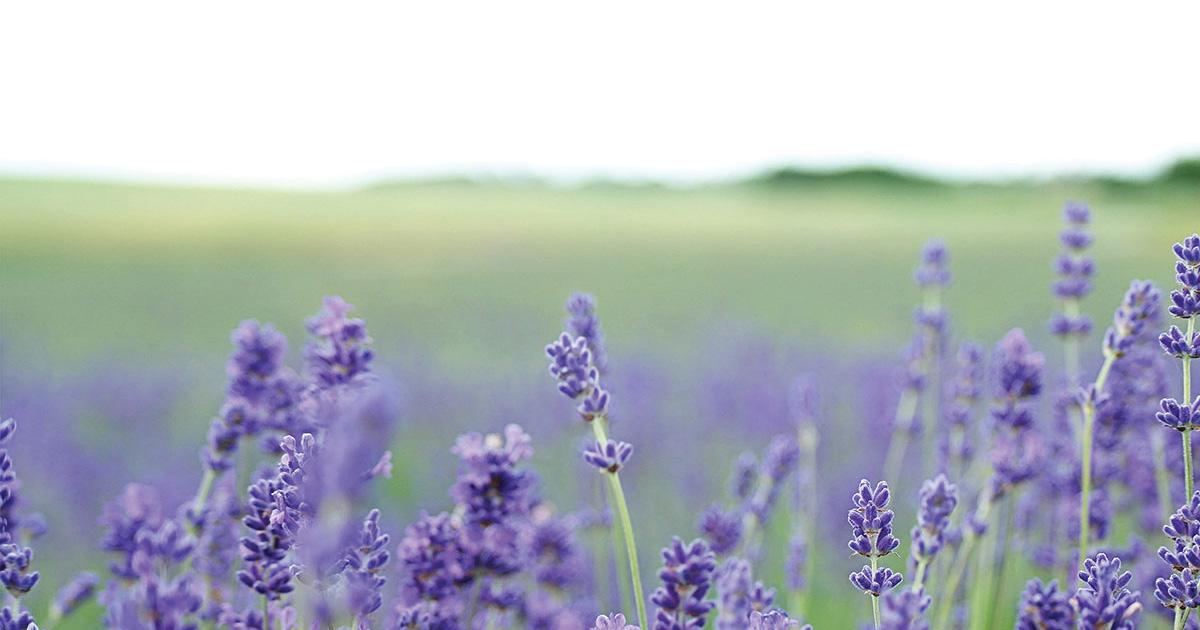 take a mini retreat with aromatherapy